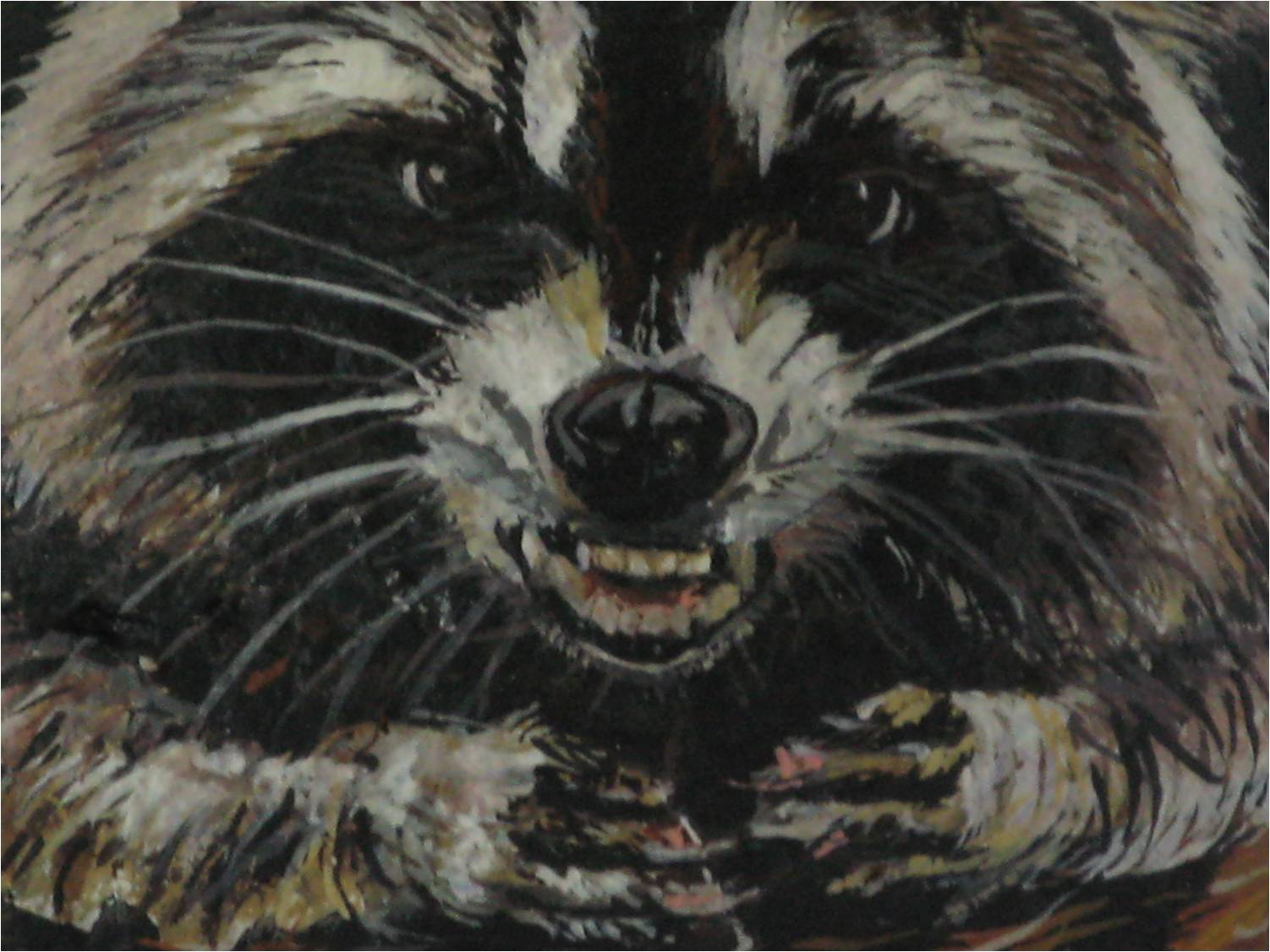 Mad Racoon close up