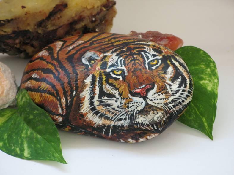 Small Tiger   ----   Tigre Chico