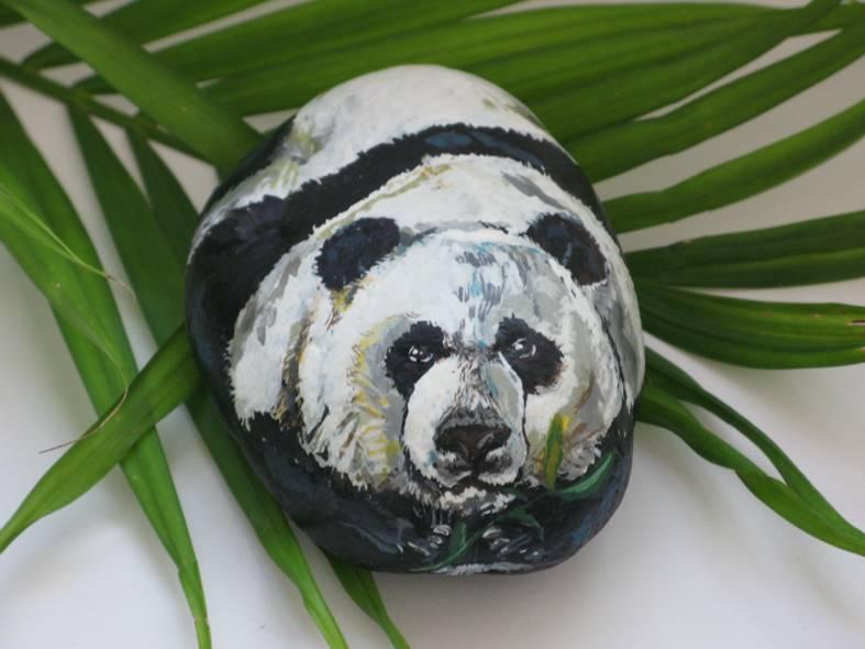 Small Panda Bear  ---   Panda Chico